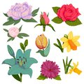 Beautiful watercolor vector handmade flower botanical bloom painting hand made summer flowers branch petal decoration