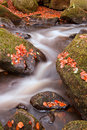 Beautiful waterfall flowing through Autumn Fall vibrant landscap Stock Image