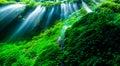 En verde bosque