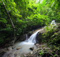 Beautiful waterfall in jungle forest rain Royalty Free Stock Image