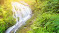 Beautiful waterfall in tropical rain forest Royalty Free Stock Photo