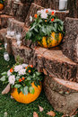 Beautiful wedding decoration autumn wedding in orange colors. Pumpkins, flowers, and candles Royalty Free Stock Photo