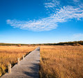 Beautiful wetland park in autumn with wooden bridge against a blue sky Royalty Free Stock Photography