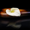 Beautiful white calla lily reflected in water Royalty Free Stock Photo