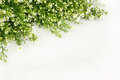 Beautiful white flower as frame on background Royalty Free Stock Photography