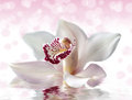 Beautiful white flower of orchid witj bokeh Royalty Free Stock Images