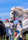 Beautiful white horse galloping at a sporting event Stock Photo