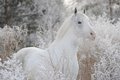 A beautiful white horse stands in the forest again Royalty Free Stock Photo