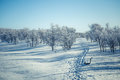 A beautiful white landscape of a snowy winter day with footprints Royalty Free Stock Photo