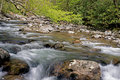 Beautiful white water streams in spring. Royalty Free Stock Photo