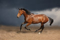 Beautiful wild brown horse galloping on sky Royalty Free Stock Photo
