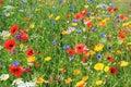 Beautiful wild flowers or wildflowers.