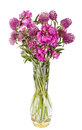 Beautiful Wild Flowers Bouquet. Wildflowers in vase Royalty Free Stock Photo