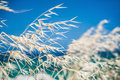 Beautiful wild grass on the sea coast selective focus Royalty Free Stock Photos