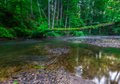 Beautiful wild river in summertime green forest Royalty Free Stock Photo