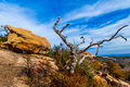 A beautiful wild western view with a gnarly dead tree a view of turkey peak on enchanted rock texas boulders and rugged plants the Royalty Free Stock Photo