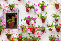 Beautiful Window and Wall Decorated Flowers - Old European Town, Cordoba, Spain Royalty Free Stock Photo