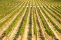 Beautiful Wine Vineyard Stock Photo