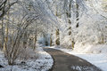 Winter alley running between trees covered with snow Royalty Free Stock Photo