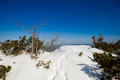 Beautiful winter in beskid mountains sunny photo taken beskidy mala babia gora babiogorski park narodowy Stock Images