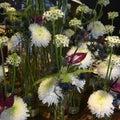 White winter flower dream with Chrysanthemum, Star of Bethlehem Flower, Anturia, Fern, Thistle, beautiful Flower Arrangement Royalty Free Stock Photo