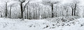 Beautiful winter forrest 360 degrees panorama