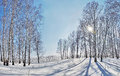 Beautiful winter landscape with bright sun and shadows from trees on snow Stock Photography