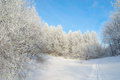 Beautiful winter landscape in forest with trees hoarfrost covered Royalty Free Stock Photography