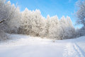 Beautiful winter landscape in forest with trees hoarfrost covered Stock Images