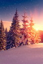 Beautiful winter landscape in mountains. View of snow-covered conifer trees and snowflakes at sunrise. Merry Christmas and happy Royalty Free Stock Photo