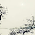Beautiful winter landscape with snow covered lake and trees foggy day background creative toning effect Stock Photos