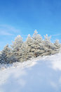 Beautiful winter landscape snow covered pines on the hill Royalty Free Stock Photos