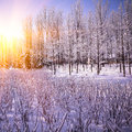 Beautiful winter landscape at sunset sunrise with trees in snow Stock Images