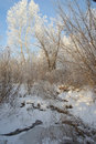 Beautiful winter landscape with trees Royalty Free Stock Photos