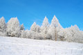 Beautiful winter landscape with trees hoarfrost covered Stock Image