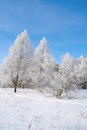 Beautiful winter landscape with trees hoarfrost covered Stock Images
