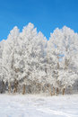 Beautiful winter landscape with trees hoarfrost covered Royalty Free Stock Photo