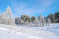 Beautiful winter landscape with trees hoarfrost covered Royalty Free Stock Image