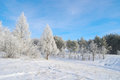 Beautiful winter landscape with trees hoarfrost covered Royalty Free Stock Images