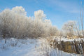 Beautiful winter rural landscape trees covered snow Royalty Free Stock Images
