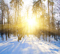 Beautiful winter sunset with trees in snow Royalty Free Stock Photo