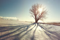 Beautiful winter tree with shadow and sun, vintage filter, Iceland Royalty Free Stock Photo
