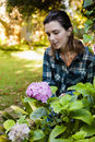 Beautiful woman crouching while looking at purple hydrangea bunch Royalty Free Stock Photo