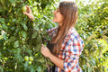 Beautiful woman picking apple from tree at summer day portrait of Stock Photos