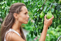 Beautiful woman picking the pear Royalty Free Stock Image