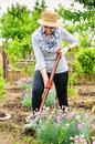Beautiful woman spade working backyard garden flowers Royalty Free Stock Photo