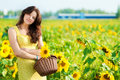 Beautiful woman in a sunflower field Royalty Free Stock Photo