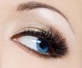 Beautiful womanish eye close up of Stock Photography