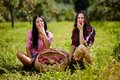 Beautiful women taking a bite of an apple sexy sitting near baskets apples Royalty Free Stock Image