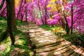 Beautiful wooden path in Plitvice Lake, Croatia Royalty Free Stock Photo